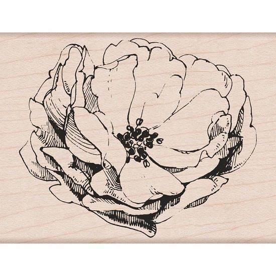 "Hero Arts - Mounted Rubber Stamp 4.25""X3.25"" - Antique Rose"