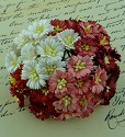 WOC Flowers - Cosmos Daisy - Mixed Red/White