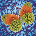Diamond Dotz - 30,5 x 30,5 cm - Flutterby Earth - DD5.022