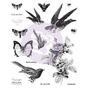 Finnabair - Cling Stamp - #Wild and Free