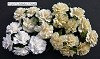 WOC Flowers - Mixed White/Cream Carnation Flowers - 25mm
