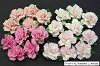 WOC Flowers - Mixed Pink Carnation Flowers - 25mm